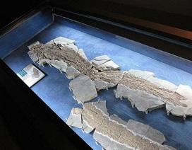 Loài cá cổ đại hé lộ thông tin về sự tiến hóa của bàn tay con người