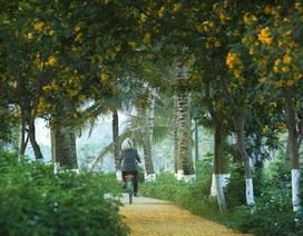 Những góc lãng mạn tại thành phố triệu cây xanh