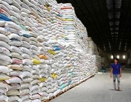 Bài học đau đớn về tạm dừng xuất khẩu gạo vẫn còn nguyên