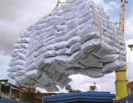 Cục Điều tra chống buôn lậu: Gạo xuất lậu có thể đi qua đường mòn, lối mở