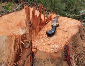 Miễn chức vụ Hạt trưởng vì để rừng liên tục bị chặt phá