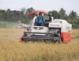 """GS. Võ Tòng Xuân: """"Chỉ cần giữ 1,5 triệu tấn gạo là bảo đảm an ninh lương thực"""""""