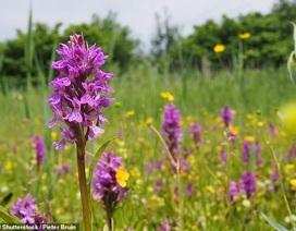 Hoa lan quý hiếm và hoa dại đang ngày càng nở rộ về phía bắc nước Anh