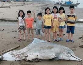 Xác cá heo dài 3m dạt vào bờ biển Thanh Hóa