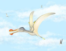 Phát hiện 3 loài bò sát bay mới ở Sahara