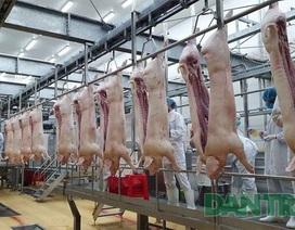 Nhiều doanh nghiệp cam kết đưa giá thịt lợn về 70 nghìn đồng/kg từ 1/4