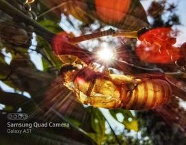 Nhiếp ảnh gia 'thán phục' nhiếp ảnh macro trên Galaxy A71|A51