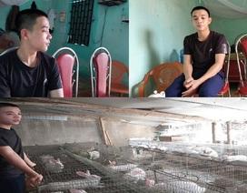 Cậu học trò lớp 12 tự chăn nuôi kiếm tiền đi học