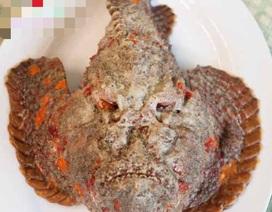 Lưu giữ trái phép các loại cá quý hiếm: 2 nhà hàng bị phạt nặng