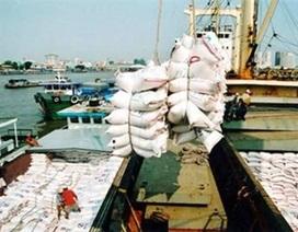 Toàn cầu mua gom tích trữ, giá gạo vọt lên cao nhất 7 năm