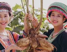 Đến thăm vùng nguyên liệu làm nên sản phẩm nước giải khát Made in Việt Nam đầu tiên dành cho người cao tuổi