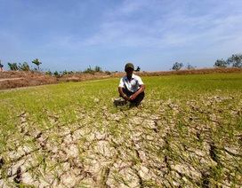 Thủ tướng duyệt 530 tỷ đồng cho 8 tỉnh chống hạn hán, xâm nhập mặn