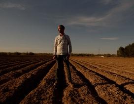 """Khốn đốn vì Covid-19, nông dân Mỹ phải tiêu hủy loạt nông sản """"ế ẩm"""""""