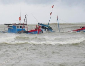 Truy tìm tàu hàng tông chìm tàu cá rồi bỏ chạy