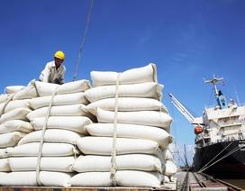 Trung Quốc chi đậm tiền mua gạo Việt, lượng mua cao gấp 4 lần năm trước