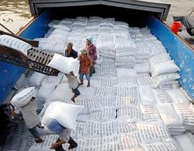 Nhiều doanh nghiệp xuất khẩu gạo phía Nam chưa thể đăng ký tờ khai hải quan