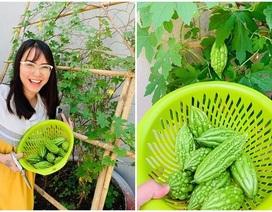 Vườn rau, trái cây xanh mướt mát của gia đình Hải Băng - Thành Đạt