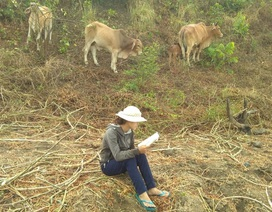 Học sinh vùng khó vừa chăn bò vừa dò sóng học online trong mùa Covid-19
