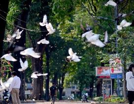 Giới trẻ đổ xô đi chụp hoa chò rơi ở trung tâm TPHCM