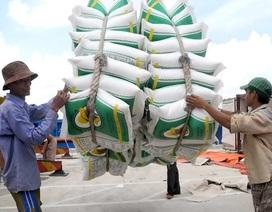 Thủ tướng yêu cầu thanh tra dấu hiệu tiêu cực trong xuất khẩu gạo