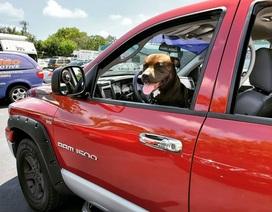 Tài xế gây tai nạn hàng loạt vì dạy chó... lái xe