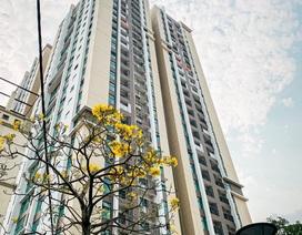 Mùa Covid, người dân Thủ đô chọn mua chung cư nhận nhà ở ngay!