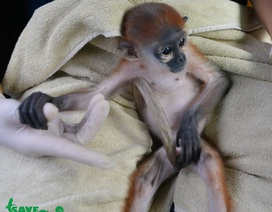 Vượt 1.000 km cứu 2 cá thể động vật nguy cấp quý hiếm