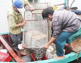 Bám biển mùa dịch, ngư dân Hà Tĩnh thu tiền triệu mỗi ngày