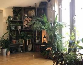 """Căn nhà như """"rừng rậm nhiệt đới"""" của chàng trai """"nghiện cây"""" ở Anh"""