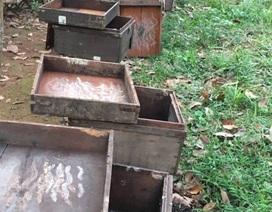 315 thùng ong mật chết đồng loạt, nghi do bị đầu độc