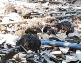 Phát hiện loài rắn nguy cấp quý hiếm tại Hà Tĩnh