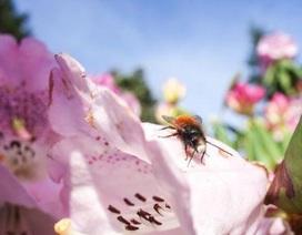 Sự sụt giảm côn trùng phức tạp hơn nhiều so với suy nghĩ