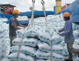 Phát hiện 161 tờ khai xuất khẩu gạo vô giá trị