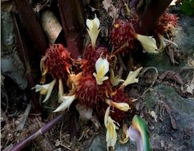 10 loài cây dược liệu có nguy cơ tuyệt chủng ở khu bảo tồn thiên nhiên