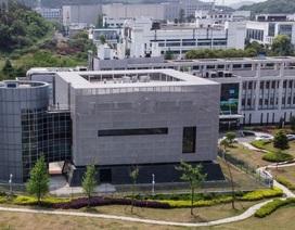 Mỹ cắt tài trợ dự án nghi liên quan tới Viện Virus học Vũ Hán