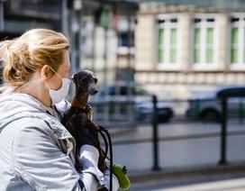 CDC Mỹ cho biết giãn cách xã hội áp dụng cả với vật nuôi trong nhà