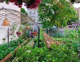 Bỏ 50 triệu đồng cải tạo vườn chuối thành khu sinh thái trong mơ