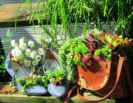 """Độc đáo """"khu vườn ve chai"""" của chị gái Lâm Đồng"""