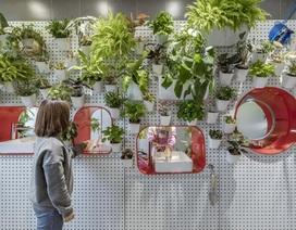 """Nhà vệ sinh công cộng ở Trung Quốc gây """"sốt"""" bởi trồng hàng nghìn cây xanh"""