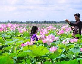 Thủ tướng nói về khả năng sen trở thành Quốc hoa của Việt Nam