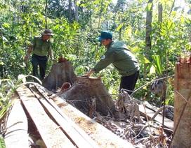 """Khởi tố vụ án """"lâm tặc"""" mở đường vào phá rừng ở Phú Yên!"""