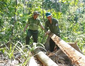 """Tỉnh Phú Yên hoả tốc yêu cầu điều tra vụ """"lâm tặc"""" mở đường phá rừng!"""