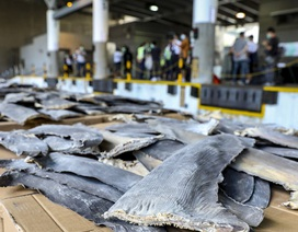 Hồng Kông phanh phui vụ buôn lậu vây cá mập lớn nhất từ trước tới nay
