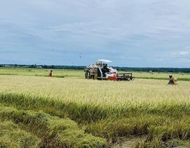 Toàn cầu lên cơn sốt, thế mạnh Việt Nam được vụ thu lớn