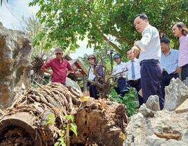 Vụ chặt cây trên đất đã mua, suýt ngồi tù: Sơ suất lại là lỗi đánh máy (?!)
