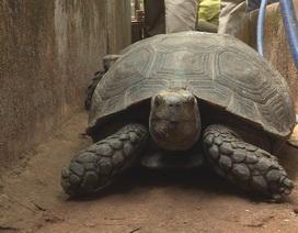 Tạm giữ 127 cá thể rùa của một hộ gia đình nuôi nhốt