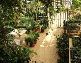 Người mẹ Đà Nẵng chăm chút khu vườn 18m2 đẹp như mơ tặng con trai