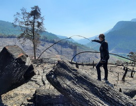 Vụ cháy hơn 32 ha rừng phòng hộ: Nghi án đốt rẫy gây cháy lan