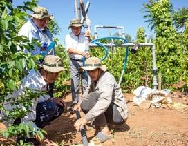 Bayer ra mắt giải pháp sáng tạo giúp nông dân phòng trừ bệnh tuyến trùng
