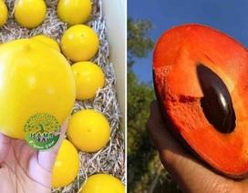 Choáng với dàn trái cây ngoại 'chỉ trời Tây mới có' được trồng hữu cơ tại Bình Thuận